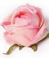 Голова розы шелк флористическая с пенопластом 7/9 см