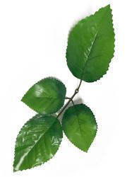 Лист яблони разм. 32 см